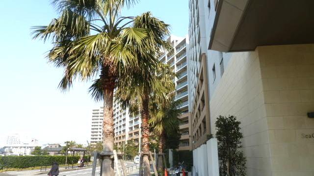 浦安市マンション シーガーデン新浦安 入居前ハウスクリーニング